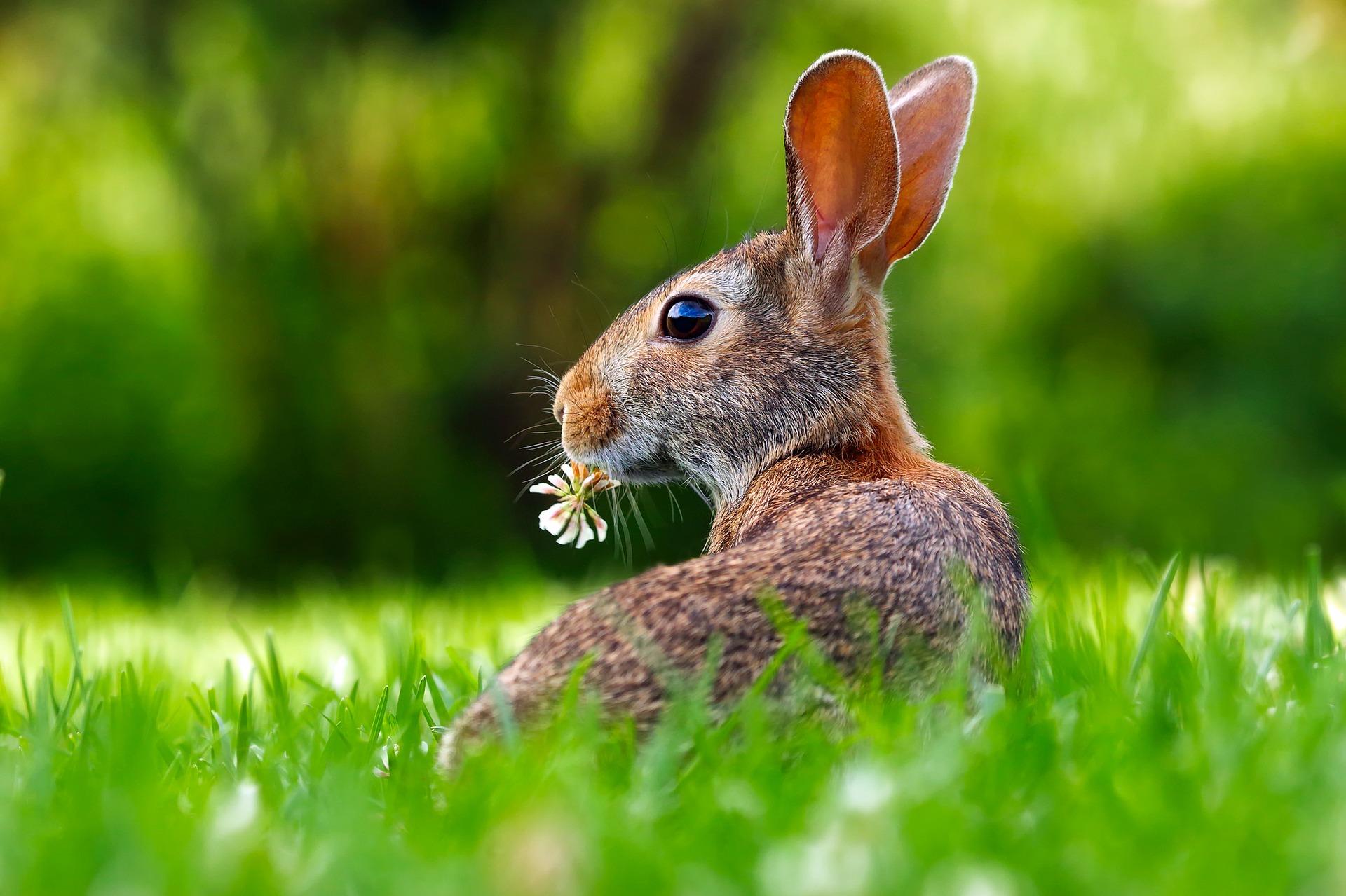 Det började med kaniner…